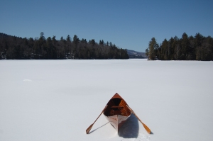 Beaver is back on Rich Lake-Late March 2013